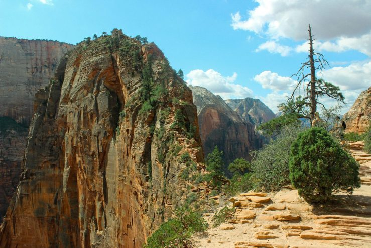 cropped-zion-cliff-face_.jpg