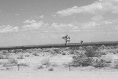 lone-cactus-bw